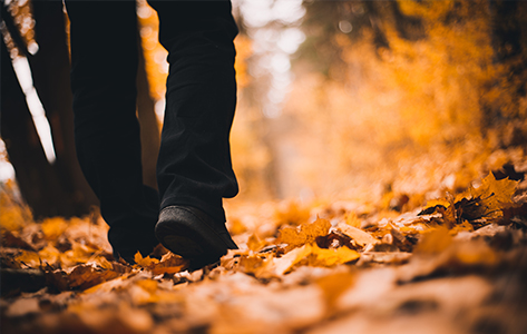 De 7 mooiste herfstwandelingen in Nederland