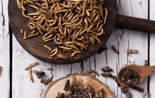 insecten-eten-voor-beginners