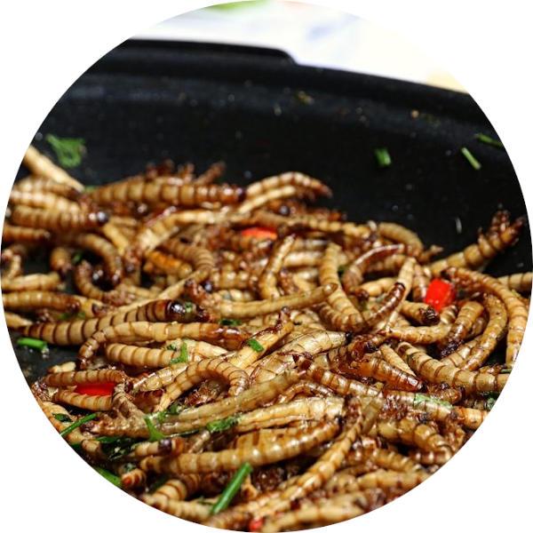 Koekenpan met gebakken meelwormen
