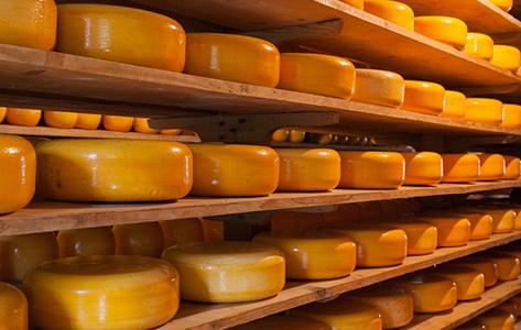 Rij ronde kazen in een kaaspakhuis