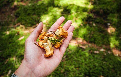 Wat kun je eten uit de natuur? 5 zelfpluk-tips voor de herfst