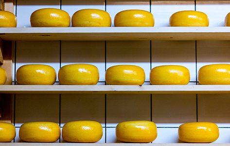 Ronde gele kazen op planken